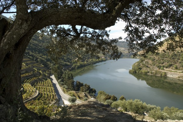 Landschaft3_81-Quinta-do-Pego_SMALL